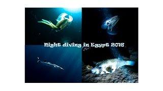 Night diving in Egypt 2016 ночной дайвинг в Египте(Эту композицию можно добавить в любое из ваших видео. Только не забудьте включить в описание ролика следующ..., 2016-03-27T15:00:07.000Z)