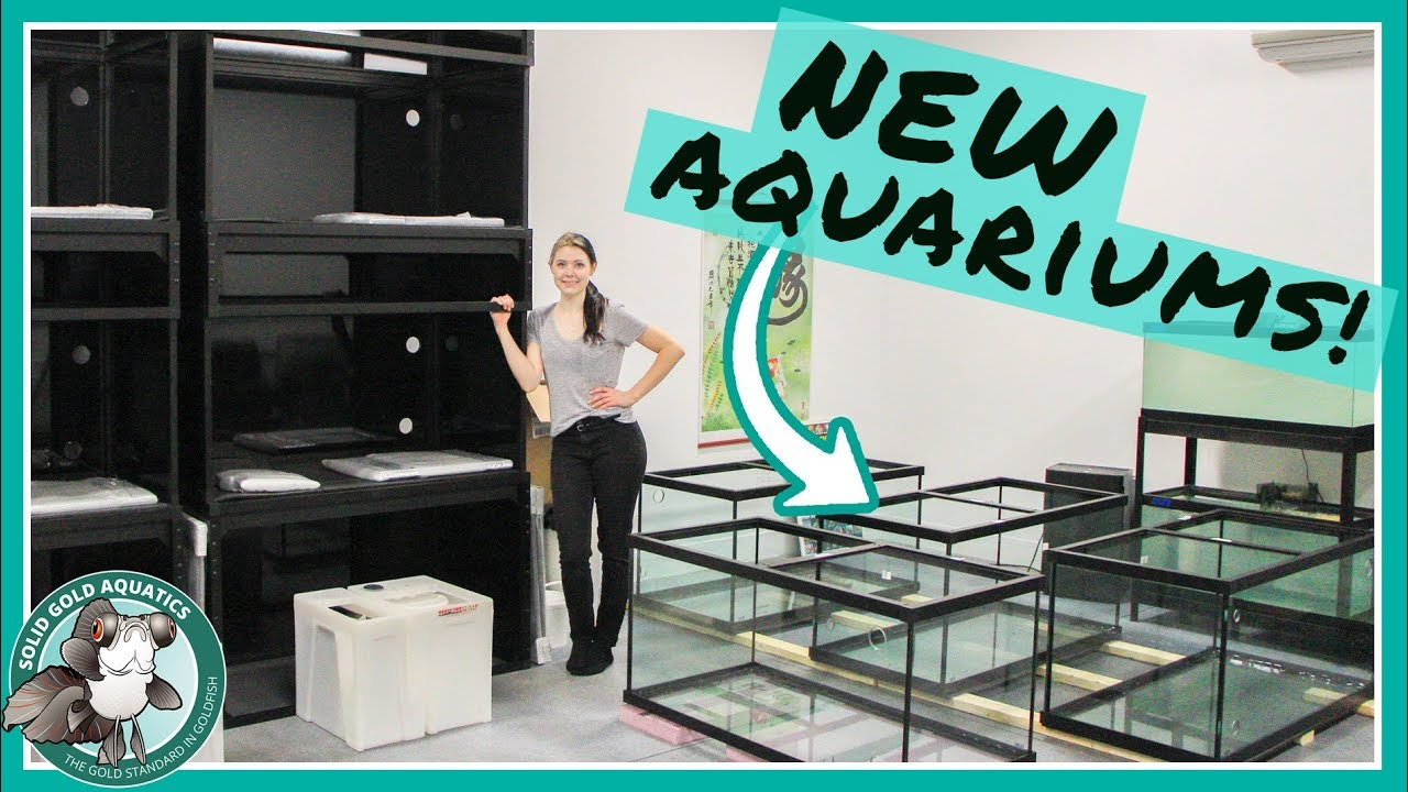 new-aquariums-are-here-vlogmas-day-5