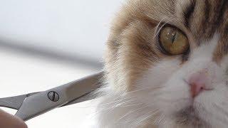 고양이들에게 곰돌이 컷을 해줬어요!