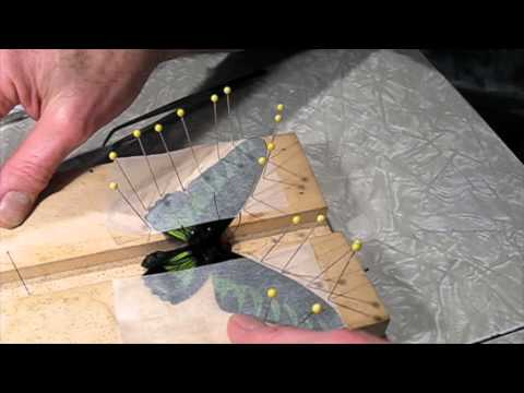 Butterfly Mounting