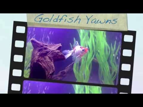Goldfish, Frogs and Clown Pleco~If Only