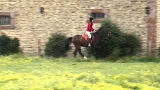 Grosse chute de cheval