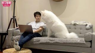 Реакция собаки, когда хозяин не обращает на нее внимание