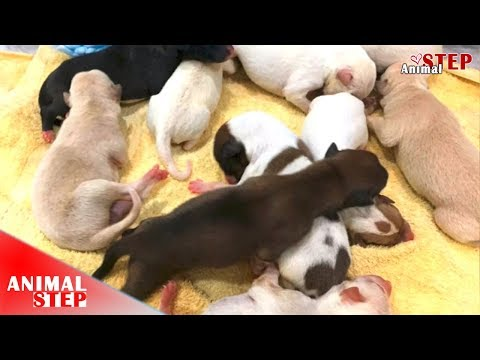 Heartbreaking – Poor 11 Pup Babies Lost Their Mother
