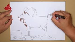 How to Paint the ibex with Oil Pastel color | step by step