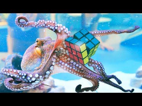Смотрите что умеет осьминог! Это САМЫЕ УМНЫЕ ЖИВОТНЫЕ в мире!
