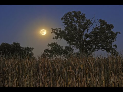 Virgo super black moon and Pisces micro harvest moon - MAJOR WARNING FROM  ABOVE (30th Aug/14th Sept)