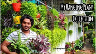 My Hanging Plant Collection with names | Homely Feel | Diyab