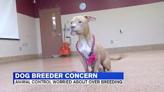 Local animal shelter suspects litter of pups stolen by backyard breeders