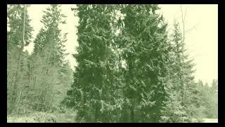 Фото ФУТАЖИ БЕСПЛАТНО ДЛЯ ТИК ТОКА#ЛЕС#ЕЛКИ,#природа#зима#идеяпоздравлениянаденьрождения#