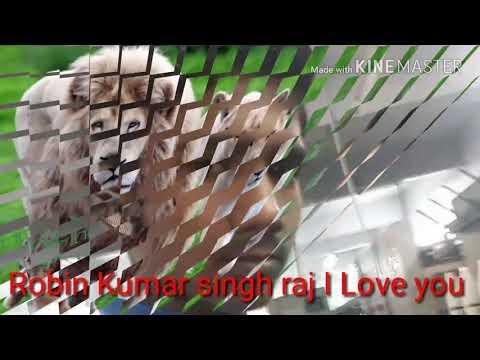 Robin Kumar singh