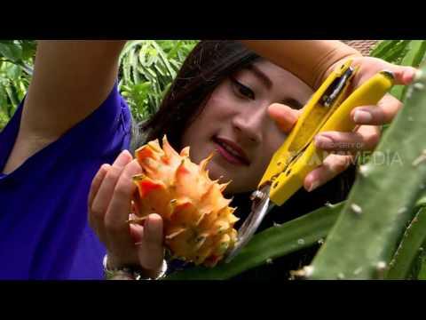 merajut-asa---warna-warni-buah-naga-(28/4/17)-3-1