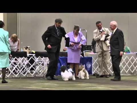 HCA2013 FRIDAY DOGS BBE 101 AWARDS