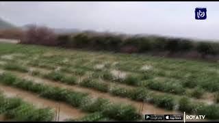 ارتفاع منسوب نهر الأردن يلحق ضررا بوحدات زراعية - (10/1/2020)