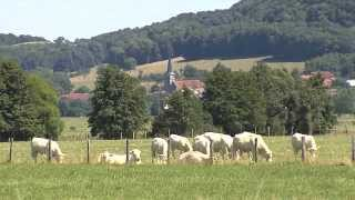 L'élevage bovin en Champagne-Ardenne