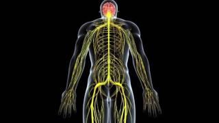 Аппликаторы Ляпко восстанавливают нервную систему и работу мозга