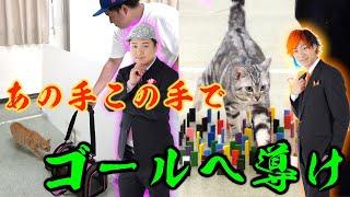 【飼主との絆】様々な難関を乗り越えろ!ネコ障害物競争!!!