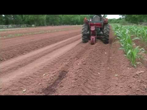 Planting Okra – May 2010 – Growing a Vegetable Garden