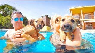 liberamos-a-dos-perritos-maltratados-y-les-enseamos-a-nadar