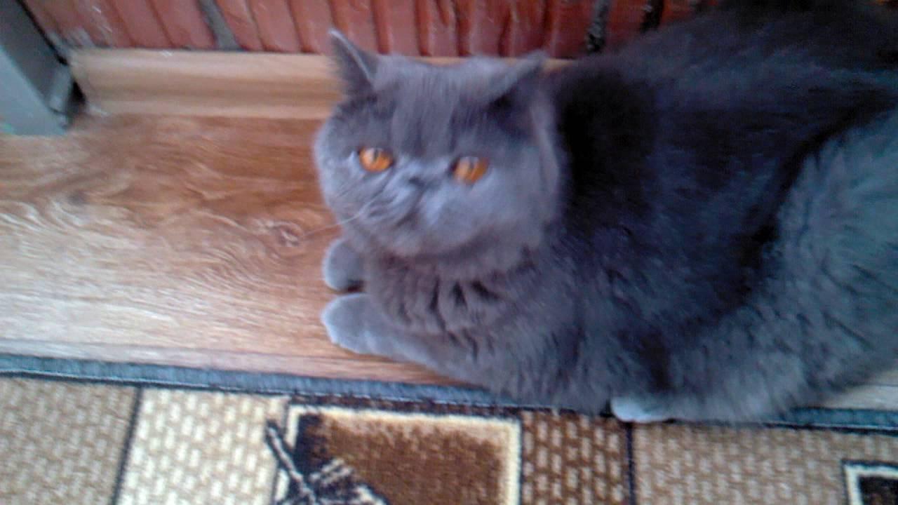 Revelation Online - Exclusive Flying Cat Misha! - YouTube