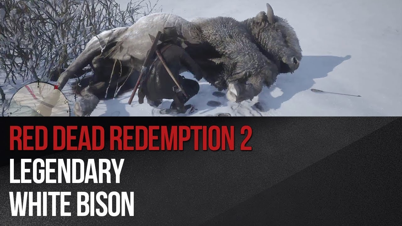 Legendary White Bison in Red Dead Redemption 2 - Red Dead