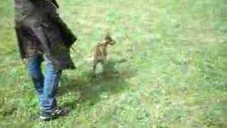 Dog Run !miniature Pinscher & pug