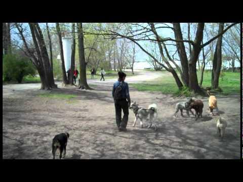 Good Dog Walkers
