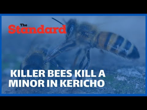 A minor dies as another fights for his life after being stung by bees in Ainamoi-Kericho County