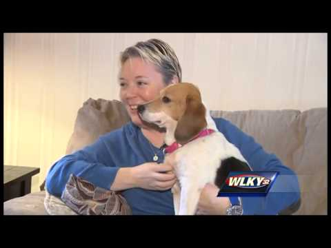 Lost dog to be reunited with owner after 17 months