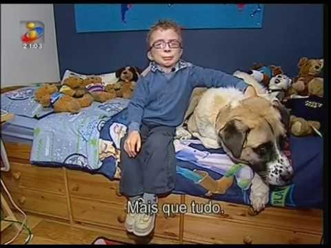 Owen e Haatchi, uma história incrível de um cão e um menino ...