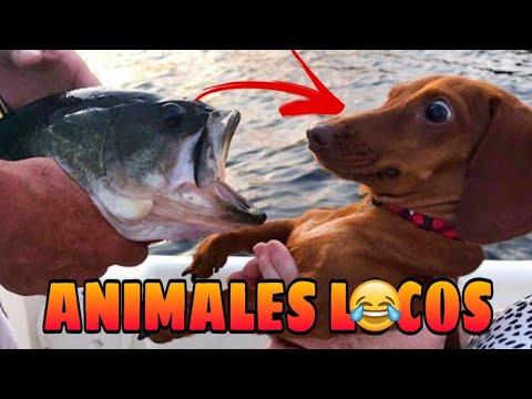 Animales Locos y Chistosos  Animales Haciendo Locuras