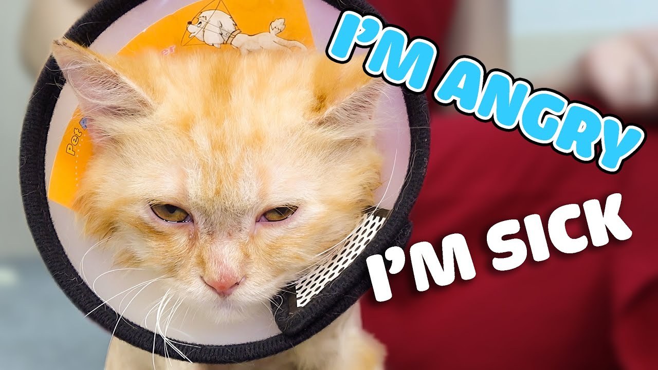 HowTo Treat Fungus for Zimba | FunCat - Meow Meow