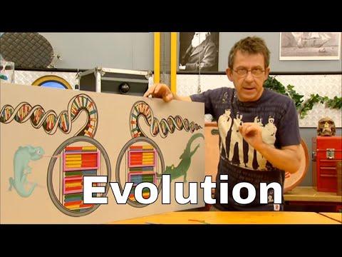 Comment expliquer les liens entre deux espèces grâce à l'ADN ? - C'est Pas Sorcier