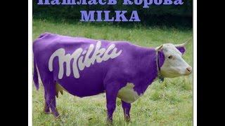 #16 Нашлась корова MILKA.(Немного веселья ;) А вы видели фиолетовую корову Milka?