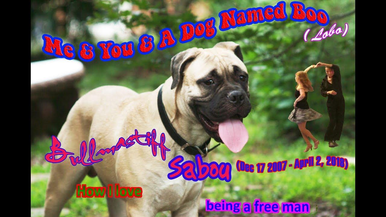 Lobo Me And You And A Dog Named Boo Karaoke