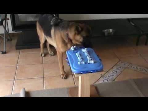 Super Intelligent Female German Shepherd Dog Willow solving Draws & Pins Nina Ottosson Puzzle