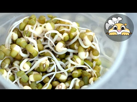 Bean Sprouts How To Grow Bean Sprouts At Home