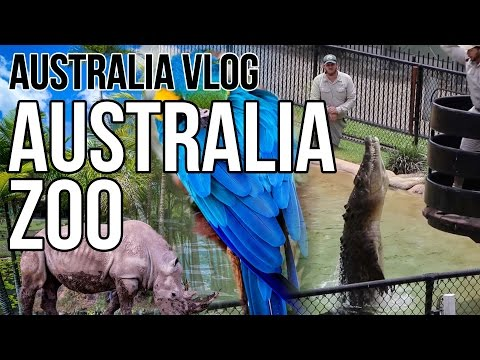 Getting to Know Australian Wildlife | A Day at Australia Zoo | Brisbane