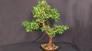 как сделать дерево банзай