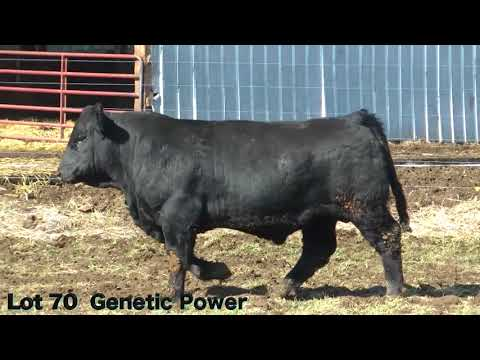 Lot 70 E13 J&K Genetic Power