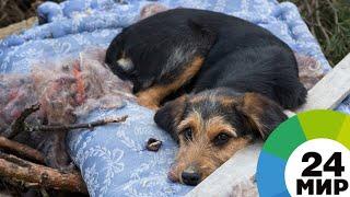 Кемеровский грумер стрижет бездомных собак и помогает найти новый дом - МИР 24