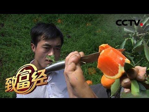 《致富经》无臂小伙 脚上生财 20190514 | CCTV农业