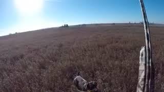 Tug & me chasing wild pheasants in dec 2018