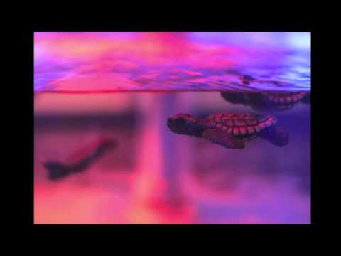 Trippy Turtle - Take U Down