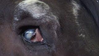Одноглазую лошадку спасли от мясокомбината. Robinzon.TV