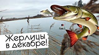 Как и где ловить щуку на жерлицы в декабре Советы по ловле щуки на жерлицы зимой