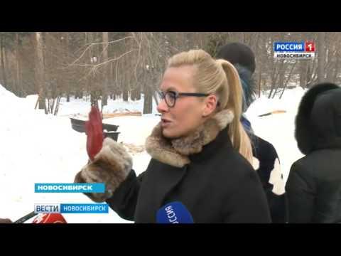 В Новосибирске посадили голубые ели на  улице Богдана Хмельницкого