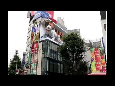 新宿の猫 (Shinjuku Cat)