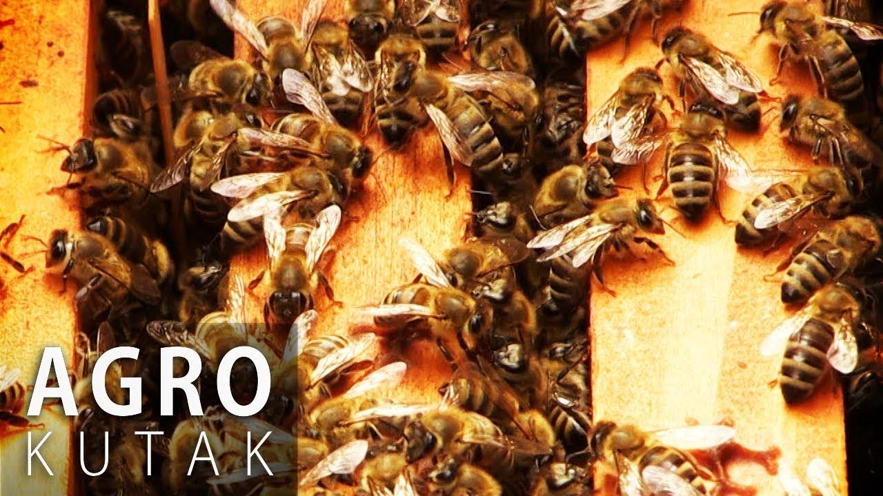 pčelarstvo za početnike pdf free download
