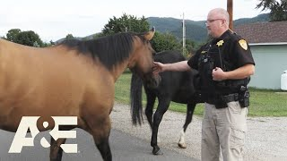 Live PD: Grass is Always Greener on the Other Side (Season 4)   A&E